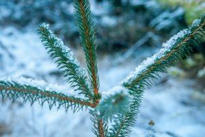 Vintersolhverv