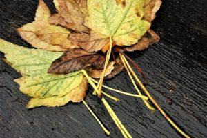 Efterårsjævndøgn